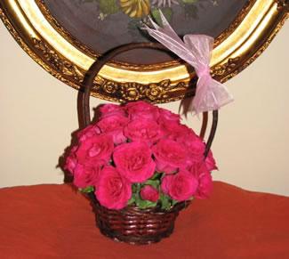 Festin de Rosas